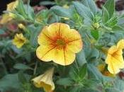 Blooms Wonders