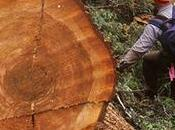 National Forests, Endangered Species Under Attack House Republicans Pass Reckless Logging Bill