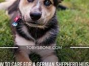 Care German Shepherd Husky Need Know