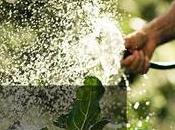 Best Garden Hose Professional Gardner's Picks