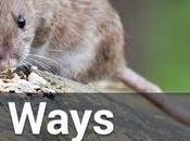 Natural Ways Keep Pests Your Home Garden