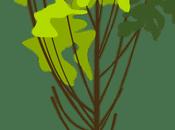 Change Bring With Green Yatra #EarthIsCalling @Greenyatra