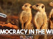 Democracy Wild