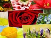 Most Beautiful Flowers World