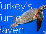 Turkey's Turtle Haven