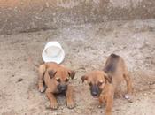 DAILY PHOTO: Puppies Savandurga