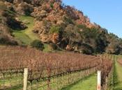 Napa Sonoma: Still Beautiful