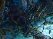 Kontiki Reef: Where Love Blue World Began