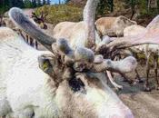 Reindeer: Things Need Know