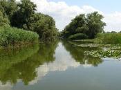 Danube Delta Sight 2018!