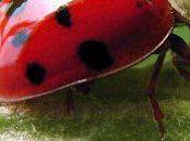 Predator Insects Indoor Gardens