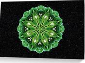 Flower Mandala Cards