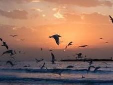 Oxygen Levels Oceans Decreasing Alarming Rate [Recent Study]