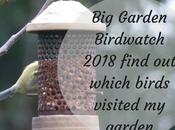 Garden Birdwatch 2018 with Surprise Visitor