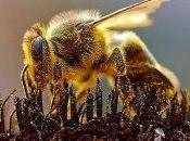 Bee's Keeper