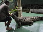 Meet Irwan Family, Lives With 6-Foot Long Crocodile