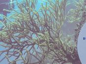 Diving Roatan: Roatan Divers