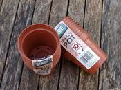 Sowing Chilli Seeds