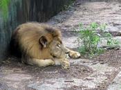 Insane Human Intrusion into Animal Zone Pays Price