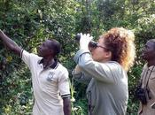 Love Birds, Butterflies Chimps? Then Don't Miss Sunbird Hill, Kibale Forest Edge
