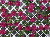 Attractive Ways Incorporate Hide) Your Heater's Outdoor Unit Garden