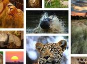 Thrilling Madhya Pradesh Wildlife Sanctuaries Need Visit with Your Family