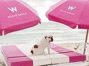 Miami Beach Welcomes Travelers Their Pets