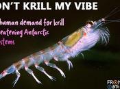 Don't Krill Vibe: Human Demand Threatening Antarctic Ecosystems
