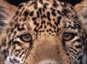 SOUTH AMERICAN ANIMALS, Available Kindle Book