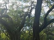Arboreal Dendrites