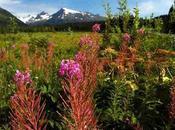 "MOUNTAINS, GRIZZLIES MAGIC, ""Real Alaska"" Part Guest Post Nora Gould"