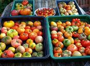 Tomato-growing Techniques