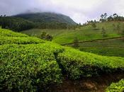 Kerala Tour Honeymooners