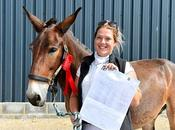 Wallace, Mule, Beats Horses Dressage