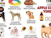 Surprising Usages Apple Cider Vinegar Dogs
