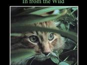 CATS: from Wild Available e-Book