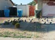 Flocking