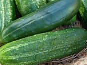 End-of-season Cucumbers