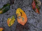Intimations Autumn
