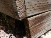 Termite Failures
