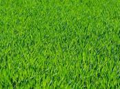 Lawns Aren't Made Just Type Grass