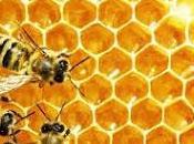 Hexagons Story