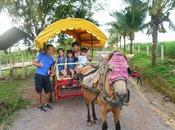 Rustic Farmstay Farm Agro Resort
