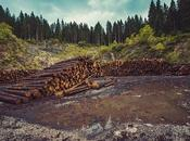 Norway Becomes World's First Country Zero Deforestation