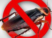Signs That Signify Your Home Infested With Cockroaches