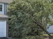 When Hire Tree Services Backyard