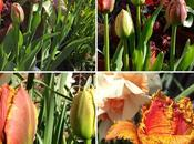 Learning with Experts Bulbs Pots Borders