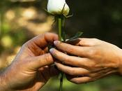 Photo: White Rose Nouvelle Blanche Www.benheine.com #rise #rose #flower #fleur #hands #live #love #couple #passion #together #petals #forest #foret #photoediting #photographie #photography