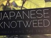 Book Review: Japanese Knotweed Unearthing Truth Nicholas Seal