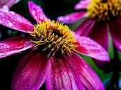 Longest Blooming Flowers Months Color